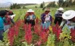 Bolivia se adhiere al Tratado Internacional sobre Recursos Fitogenéticos para la Alimentación y la Agricultura