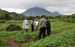 """El Parlamento de Uganda reconsiderará el estancado """"proyecto de ley sobre OGM"""""""