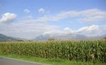 El Cambio Climático reducirá el rendimiento de los cultivos