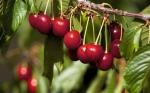La industria alimentaria de Chile exporta a 150 países
