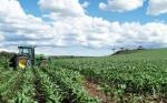 Extensas tierras y legislación son oportunidades de Colombia en transgénicos
