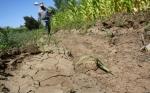 Un químico que protege de la sequía