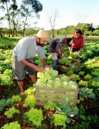 Columna de Opinión del Dr. Sergio Moreira. En defensa de los agricultores orgánicos
