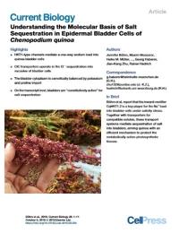 Comprendiendo la base molecular del secuestro de sal en células vesicales epidérmicas de «Chenopodium quinoa»