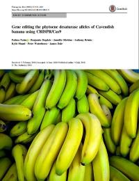 Gen que edita los alelos de la fitoeno desaturasa de Cavendish banana utilizando CRISPR / Cas9