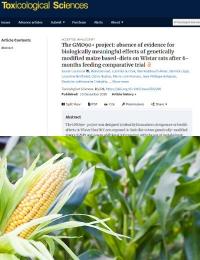 El Proyecto GMO90 +: Ausencia de evidencia de los efectos biológicamente significativos de las dietas basadas en maíz genéticamente modificadas en ratas Wistar después de un ensayo comparativo de alimentación de 6 meses