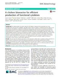 Un biorreactor en gallinas ponedoras para la producción eficiente de citoquinas funcionales