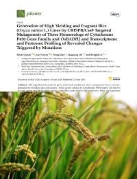 Generación de líneas de arroz de alto rendimiento y fragante (Oryza sativa L.) por mutagénesis dirigida CRISPR/Cas9 de tres homoeólogos de la familia de genes del citocromo P450 y OsBADH2 y perfil de transcriptoma y proteoma de cambios revelados provocados por mutaciones