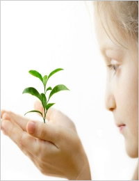 El Principio Precautorio: ¿Por qué no es  un argumento válido para oponerse a los  Organismos Genéticamente Modificados  (OGM)?