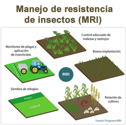 Manejo de resistencia de insectos (MRI)