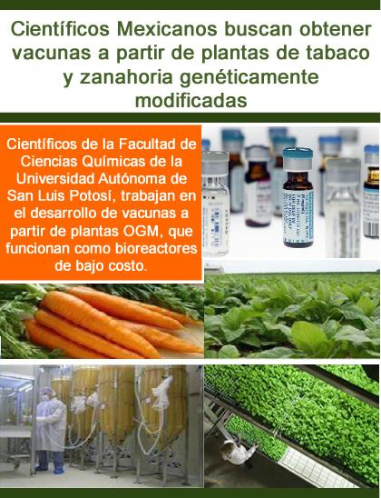 Vacunas a partir de plantas de tabaco y zanahoria