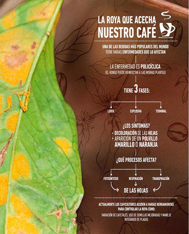 Roya del Café