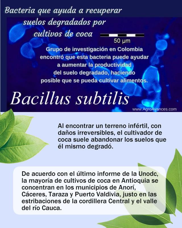 Bacteria que revive los suelos erosionados por la coca