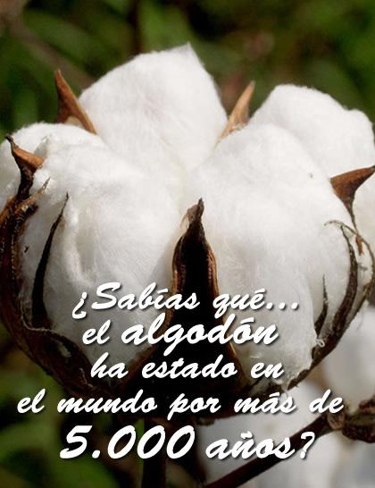 El algodón es el cultivo más cosechado en el mundo, a pesar de no ser un producto 100% comestible