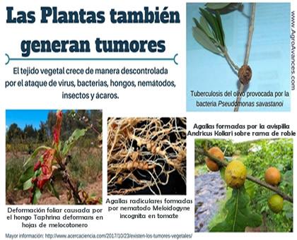 Existen los tumores vegetales