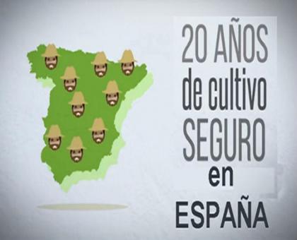 El cultivo de maíz Bt en España