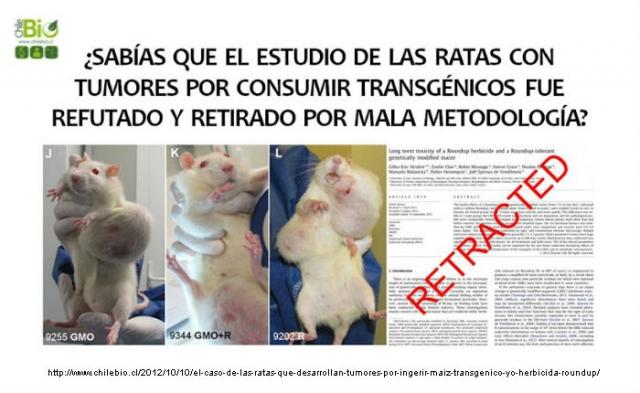 El caso de las ratas que desarrollan tumores por ingerir maíz transgénico y/o herbicida Roundup