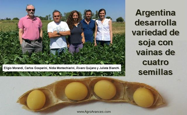 Científicos en Argentina desarrollan variedad de soja que posee vainas de cuatro semillas