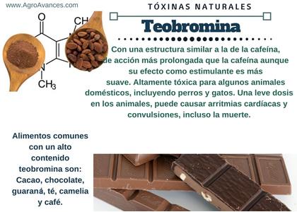 Teobromina, efectos, contraindicaciones y alimentos disponibles