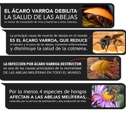 El ácaro Varroa y las abejas melíferas