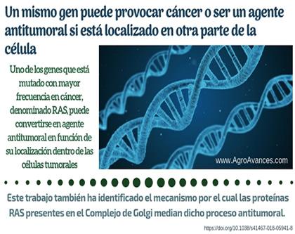 Un mismo gen puede provocar cáncer o ser un agente antitumoral si está localizado en otra parte de la célula
