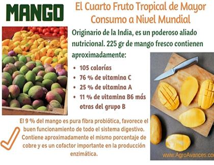 Mango: El Cuarto Fruto Tropical de Mayor Consumo a Nivel Mundial