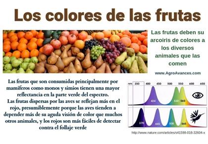 Cómo obtuvieron las frutas sus colores llamativos