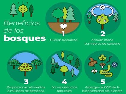 Beneficios de los Bosques