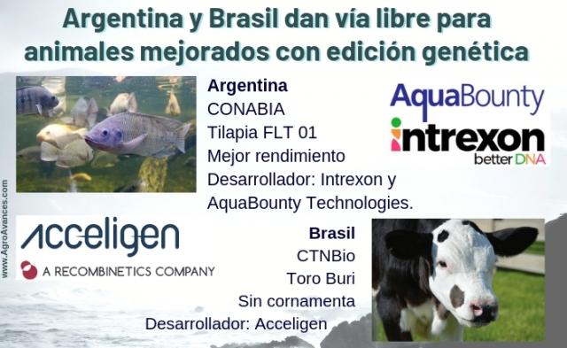 Argentina y Brasil dan vía libre a animales mejorados mediante la edición génica