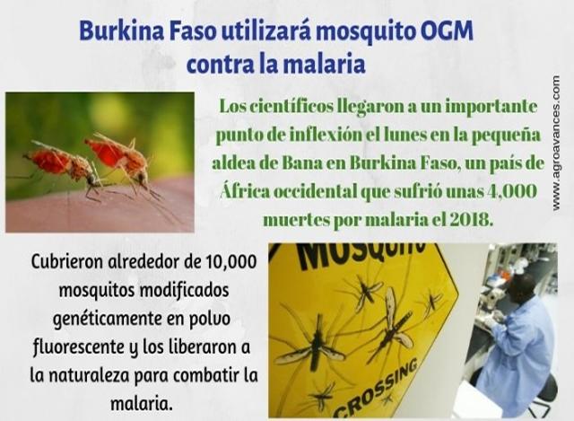 Burkina Faso lucha contra la malaria con un mosquito OGM