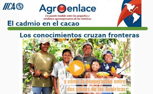 El cadmio en el cacao. Los conocimientos cruzan fronteras