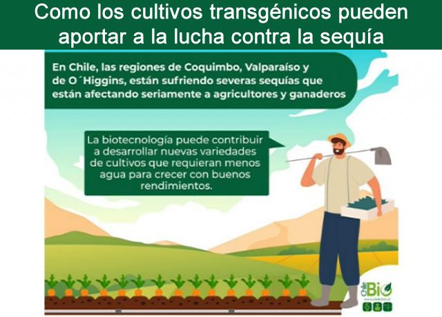 Como los cultivos transgénicos pueden aportar a la lucha contra la sequía