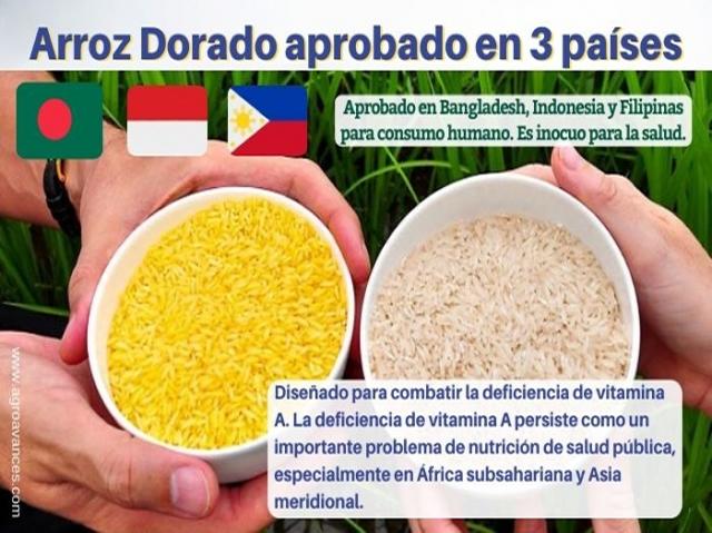 Arroz Dorado aprobado en 3 países