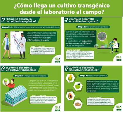 Cómo llega un cultivo transgénico desde el laboratorio al campo